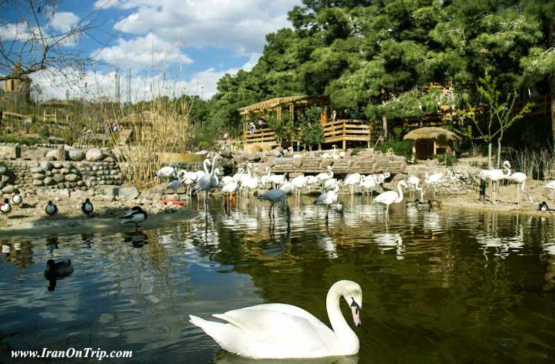 Tehran Birds Garden