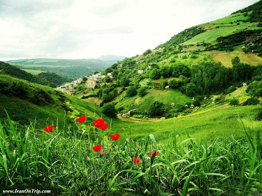 Padoldol plains of anemones - Golestan Tourist Attractions