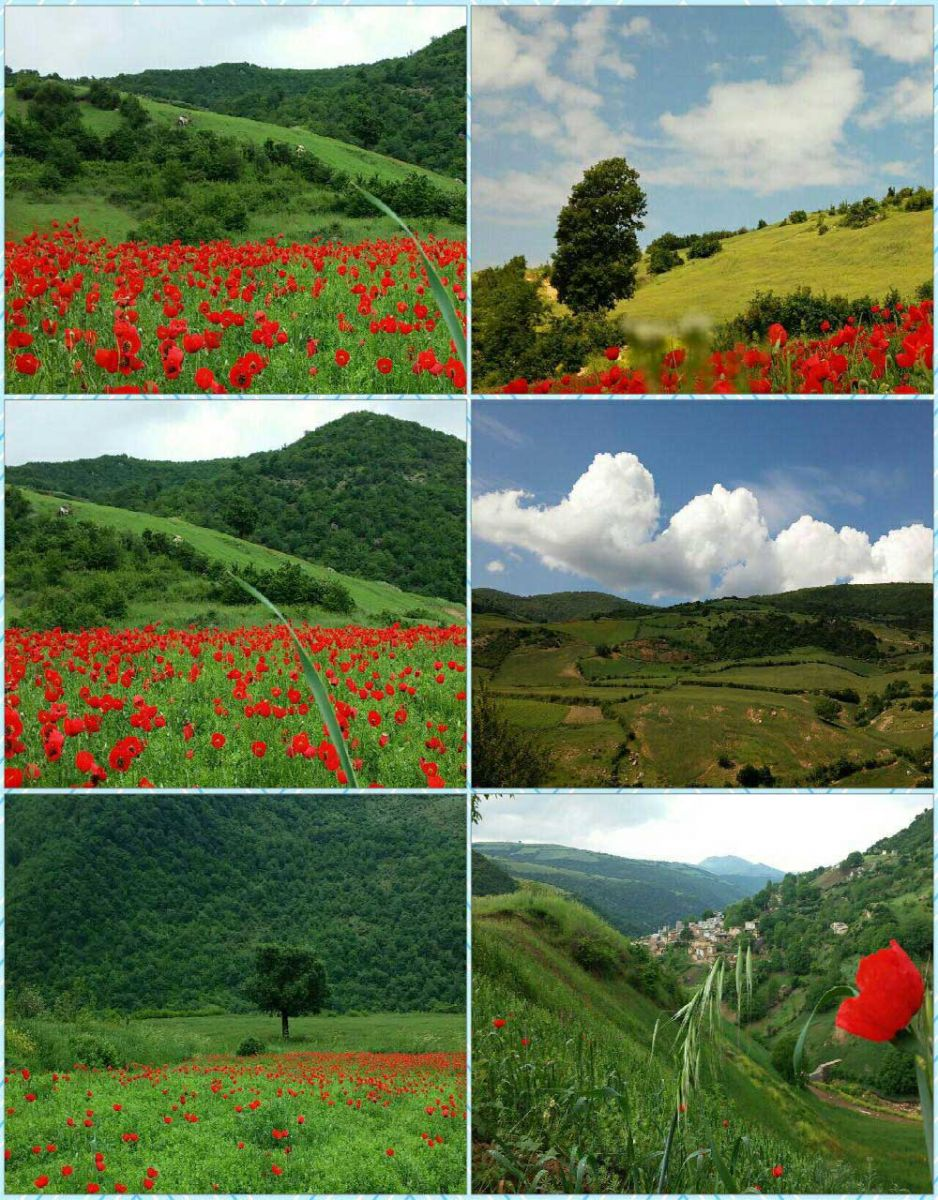 Anemones plain, padoldol village, Galikesh of Golestan - Golestan Tourist Attractions